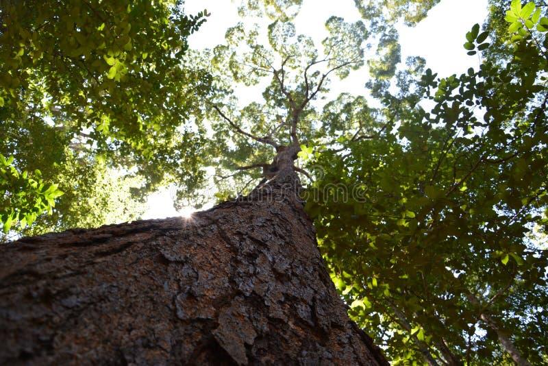 Download Grande albero immagine stock. Immagine di tecnologia - 55358641