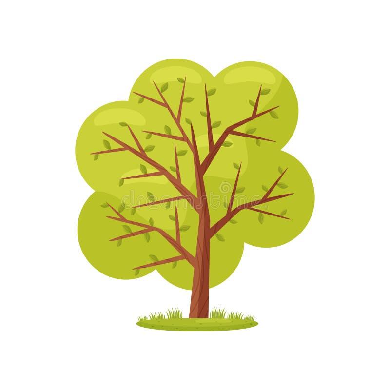 Grande albero con le foglie verde intenso Pianta agricola Elemento naturale del paesaggio Agricoltura del tema Progettazione pian illustrazione di stock