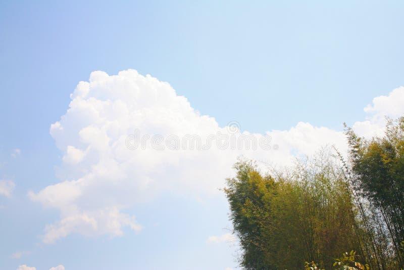 Grande albero di bambù e del nuvola immagine stock libera da diritti