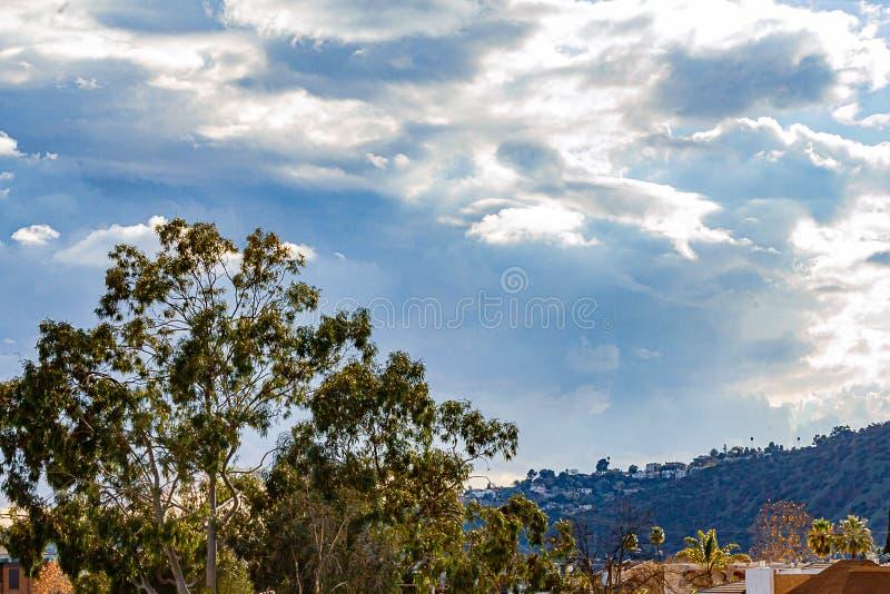 Grande albero di eucalyptus con la vicinanza, l'ecologia del pendio di collina della montagna, le case ed il grande cielo delle n fotografia stock