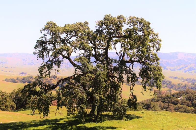 Grande albero nel paesaggio immagini stock