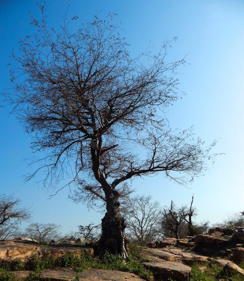 Grande albero senza foglie su dopo la stagione di autunno fotografia stock