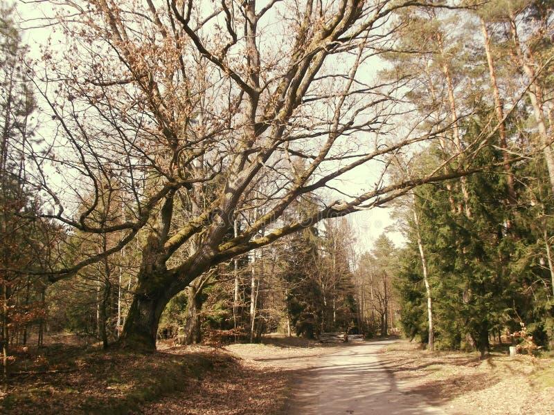 Grande albero sulla strada - esponga al sole la versione immagine stock