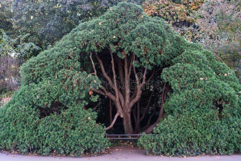 Grande albero voluminoso in parco fotografia stock