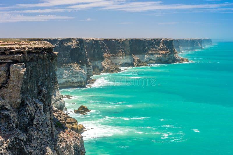 Grande ansa australiana fotografie stock