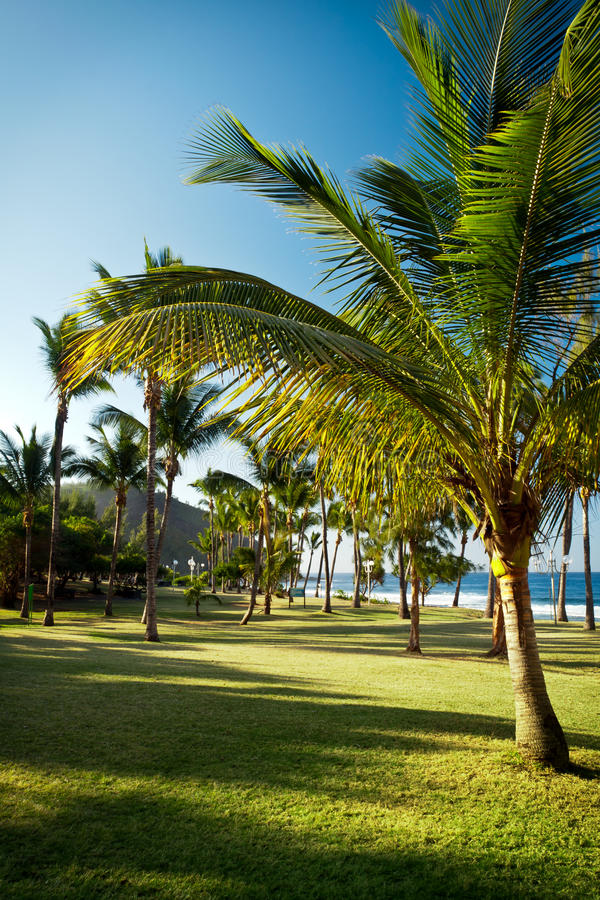 Download Grande Anse Beach, Reunion Island Stock Image - Image: 21841337
