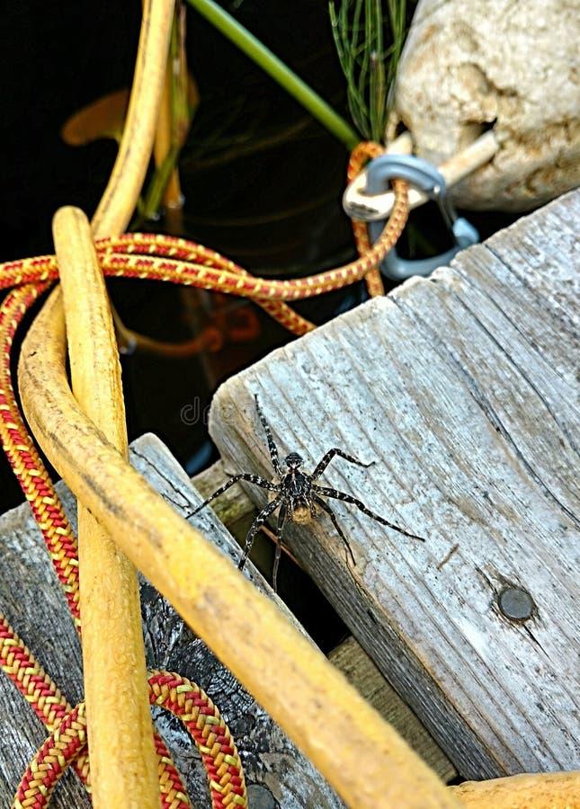 Grande araignée photo stock