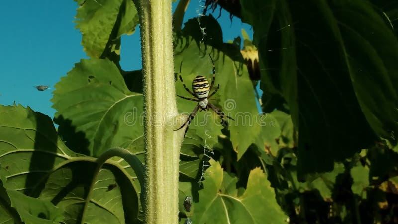 Grande araignée ! photos stock