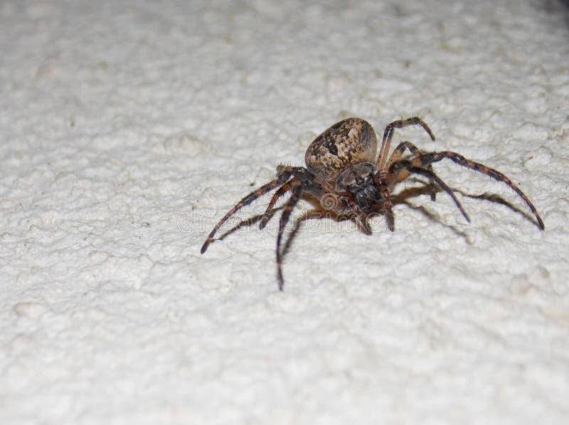 grande araignée sur le mur photo stock