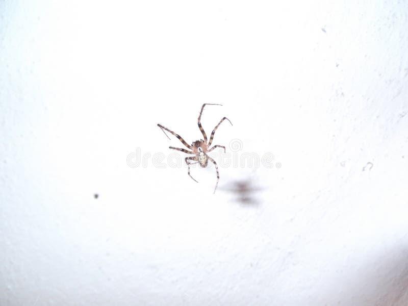Grande aranha na parede imagens de stock