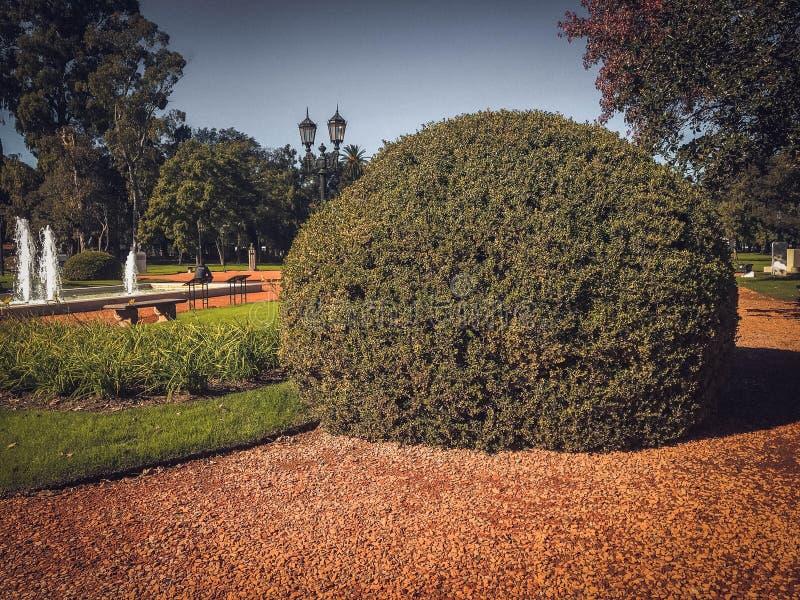Grande arbusto do buxus fotografia de stock royalty free