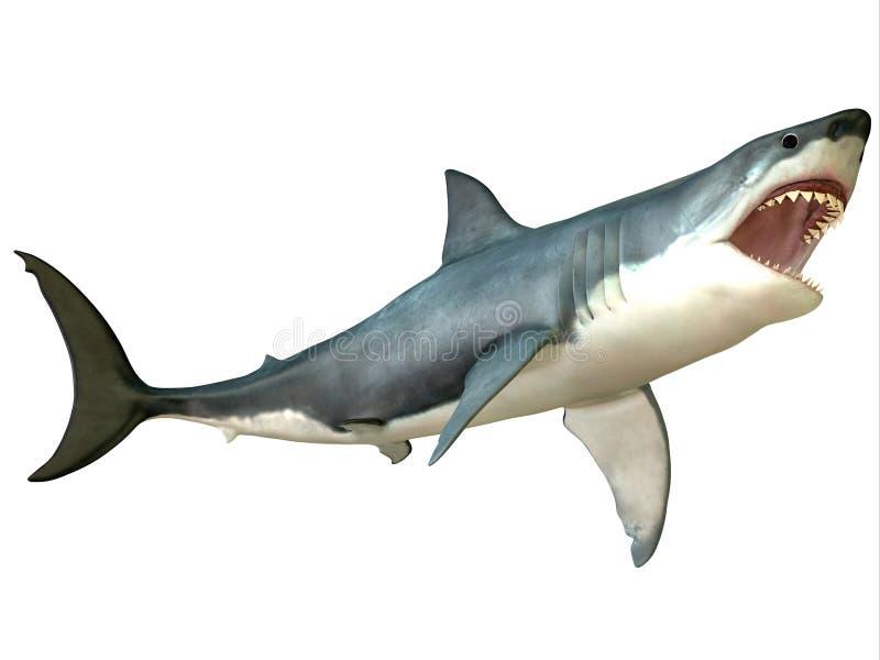 Grande attacco dello squalo bianco fotografia stock