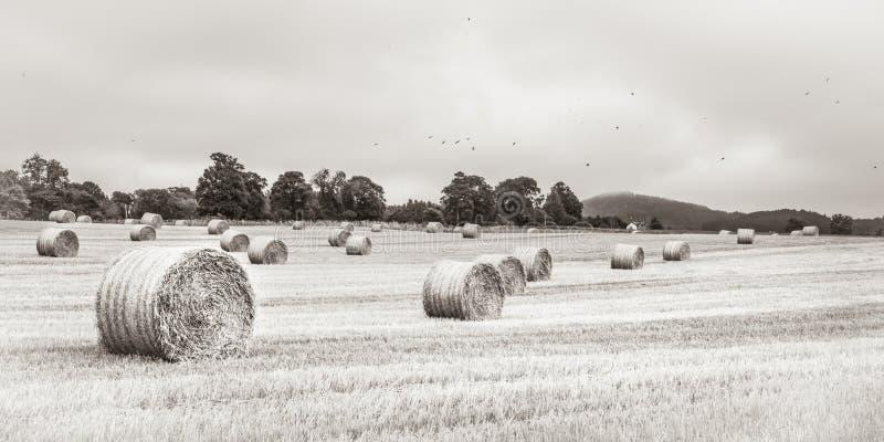 Grande balle ronde de paille sur le champ - Ecosse photo libre de droits
