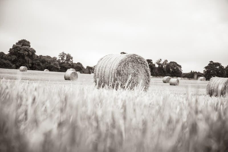 Grande balle ronde de paille sur le champ - Ecosse photographie stock
