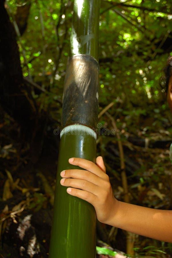 Grande bambù! fotografia stock libera da diritti