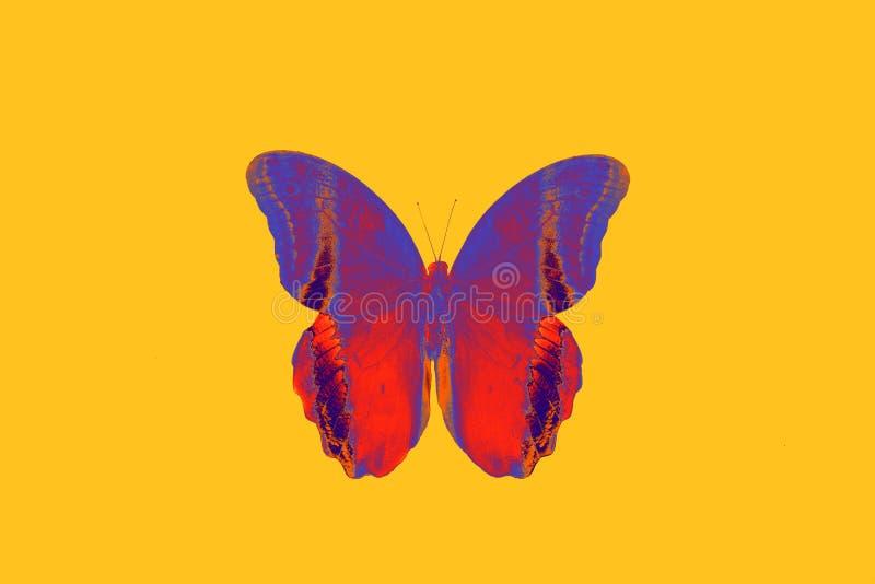 Grande beautyful brillante del color baterfly en backgraund amarillo fotografía de archivo libre de regalías