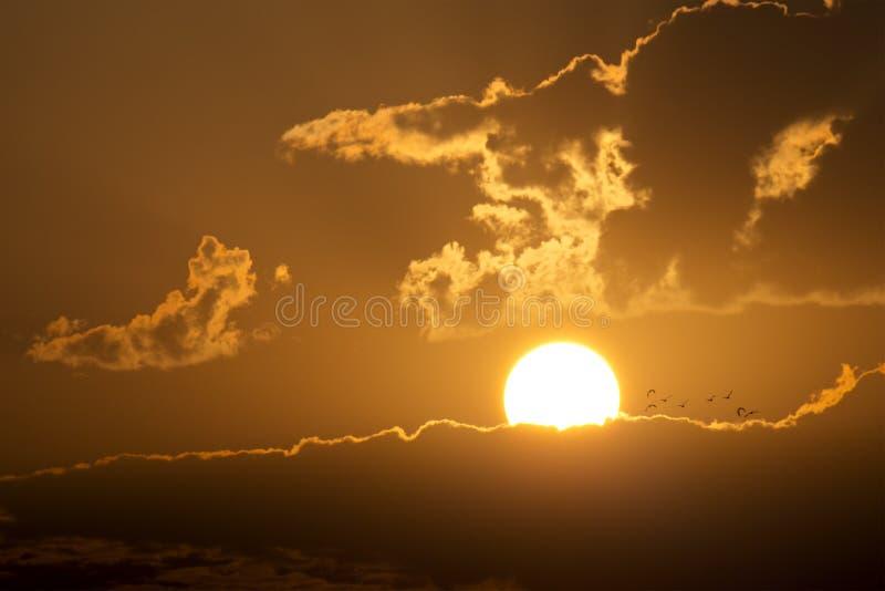 Grande bella alba con gli uccelli che volano verso il sol levante fotografia stock