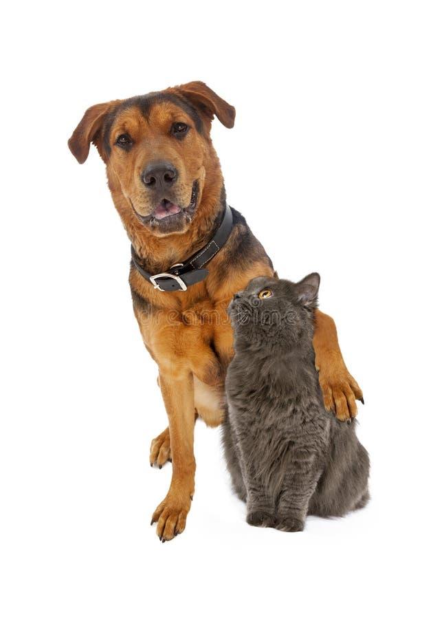 Grande braço misturado do cão da raça em torno do gato fotografia de stock royalty free