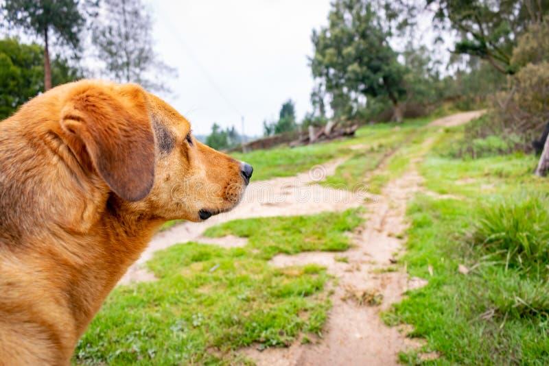 Grande cão que olha as montanhas cercadas por natureza foto de stock royalty free