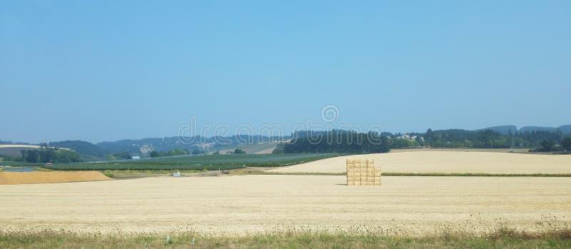 Grande campo di fieno o di erba marrone e una pila di balle di fieno immagine stock