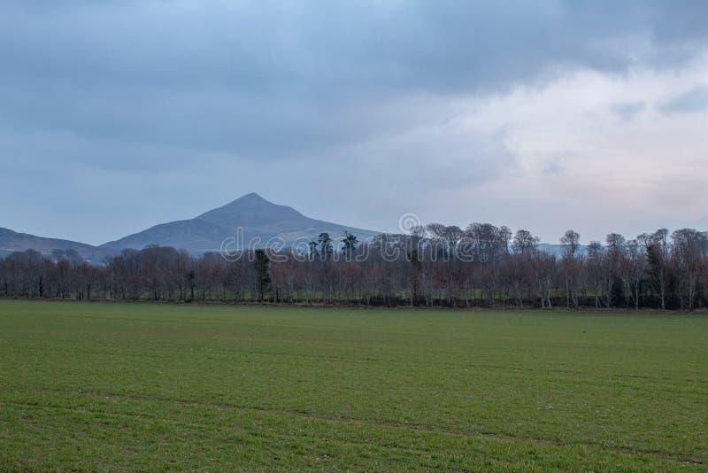 Grande campo verde na frente de grande Sugar Loaf imagens de stock royalty free