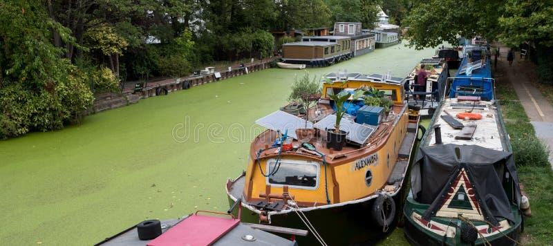 Grande canale a poca Venezia, Paddington, Londra del sindacato L'acqua è coperta in alghe verdi dopo l'onda di calore dell'estate fotografia stock