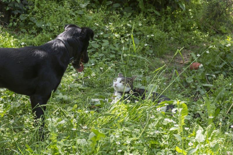 Grande cane e piccolo gatto fotografia stock libera da diritti