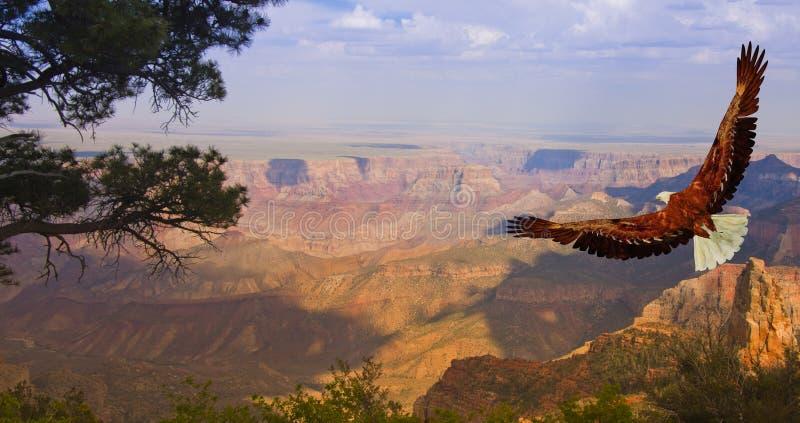 Grande canyon S.U.A. immagine stock