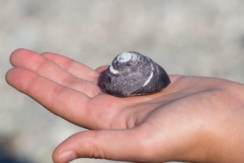 Grande caracol de mar na m?o de uma menina foto de stock royalty free