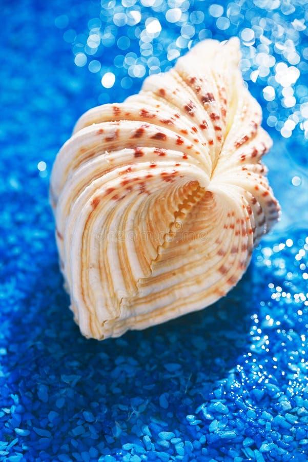 Grande carapaça de peixe-espada branco em seixo azul com gotas de água fotografia de stock royalty free