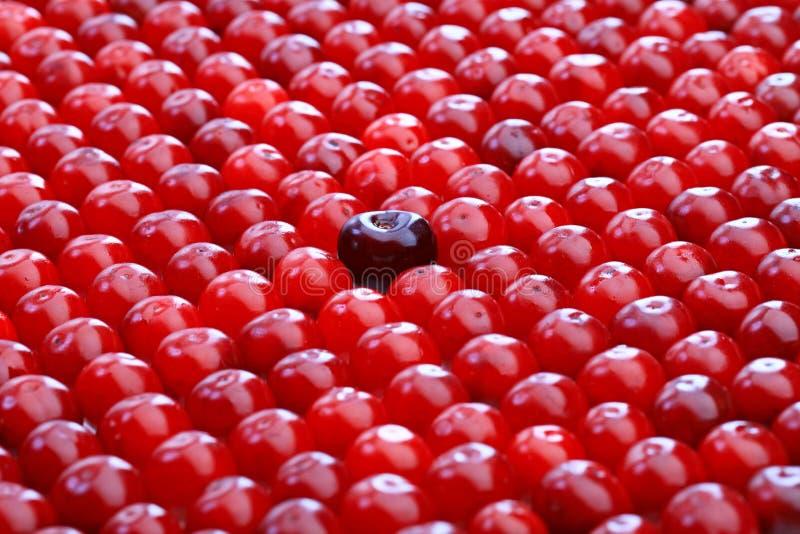 Grande cerise noire parmi de petites cerises rouges photo stock