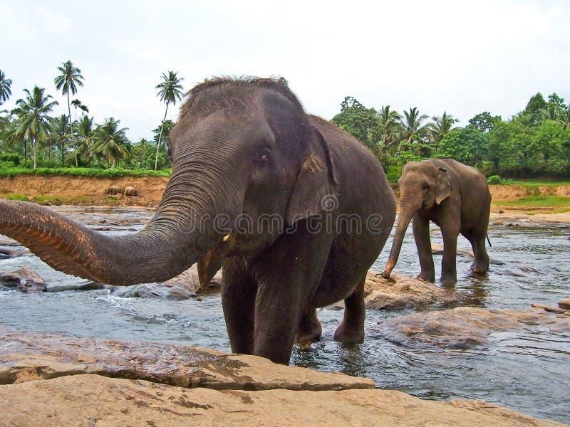 Grande circuito di collegamento elefant di esposizioni fotografie stock libere da diritti