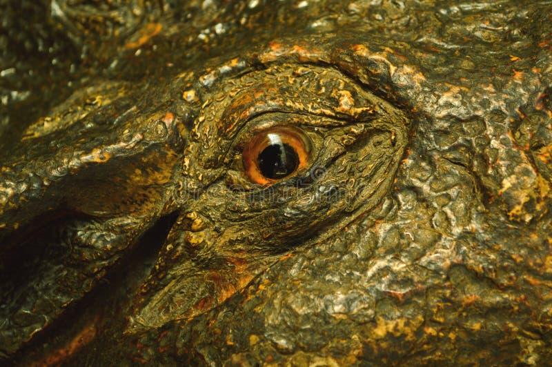 Grande coccodrillo degli occhi immagine stock