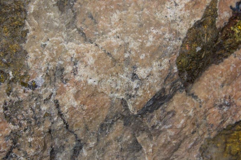 Grande cockleshell Fine su struttura della conca della lumaca immagini stock libere da diritti