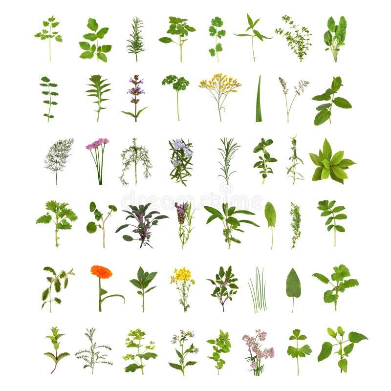 Grande coleção da folha e da flor da erva ilustração royalty free