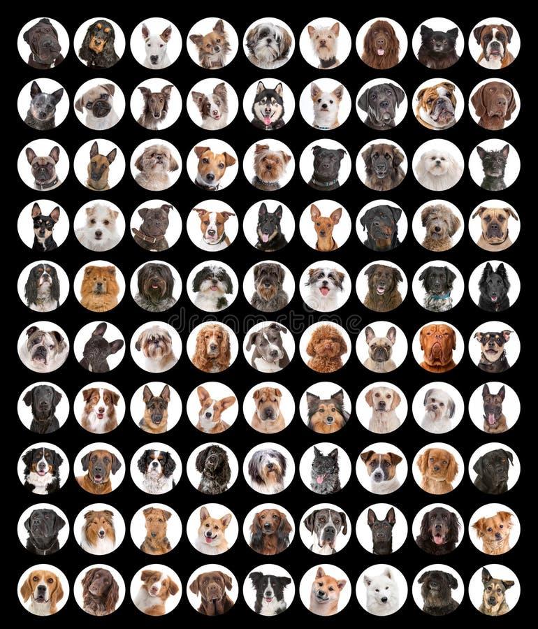Grande coleção de retratos do cão fotografia de stock royalty free