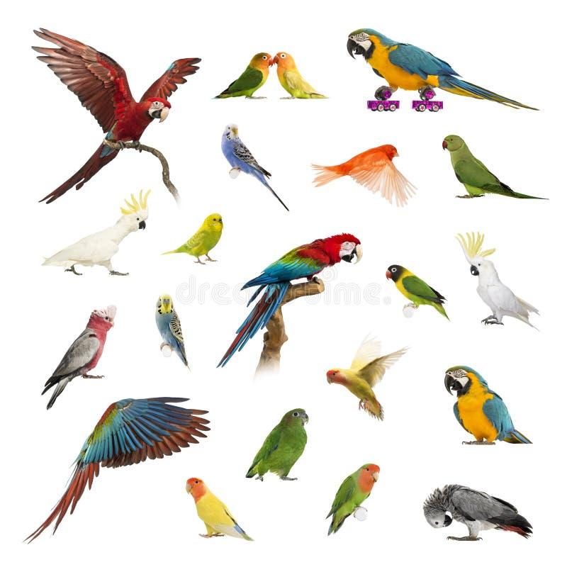 Grande coleção do pássaro, do animal de estimação e de exótico, na posição diferente imagens de stock