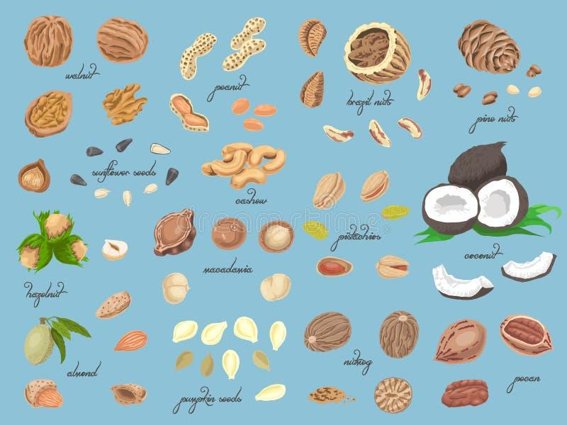 Grande collection d'écrous et de graines colorés d'isolement illustration libre de droits