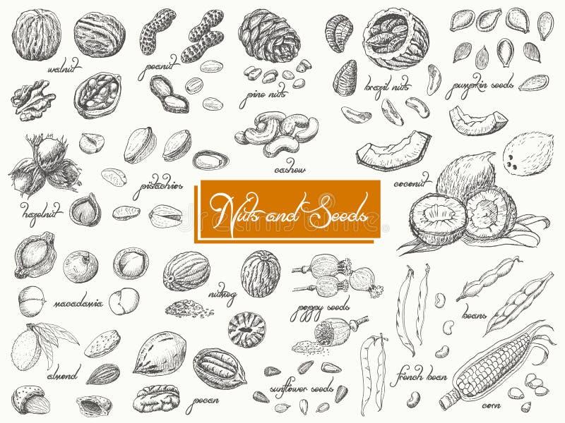 Grande collection d'écrous et de graines d'isolement sur le fond blanc illustration libre de droits
