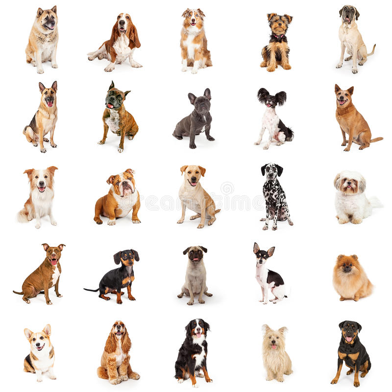 Grande collection de chiens communs de race photos stock
