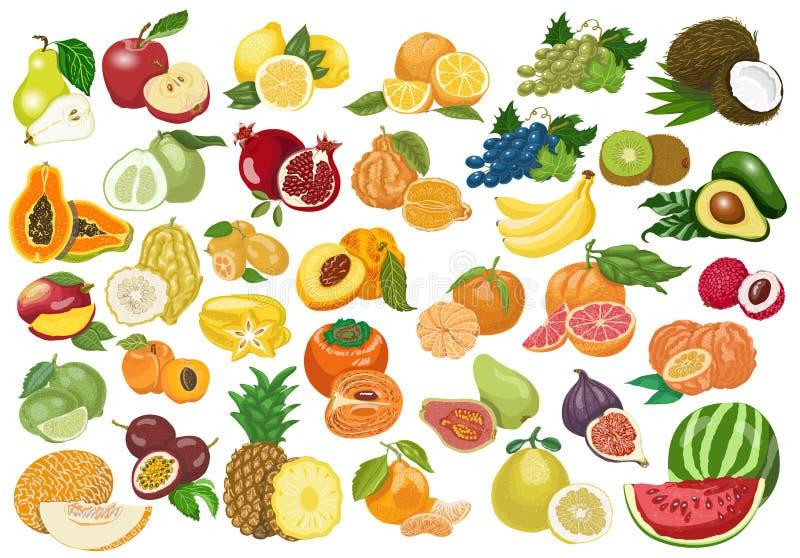 Grande collection de fruits d'isolement sur le fond blanc illustration stock