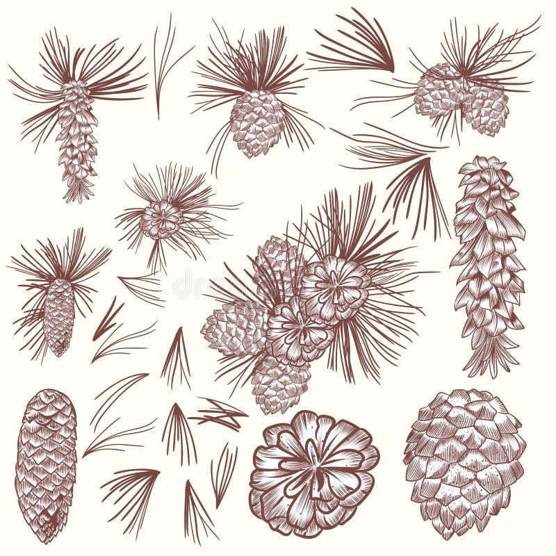 Grande collection de grains d'arbre de sapin de vecteur pour la conception de Noël illustration de vecteur