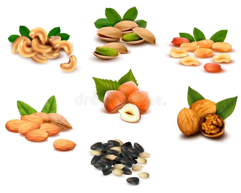 Grande collection de noix mûres illustration stock