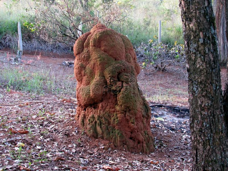 Grande colonia delle termiti immagini stock libere da diritti