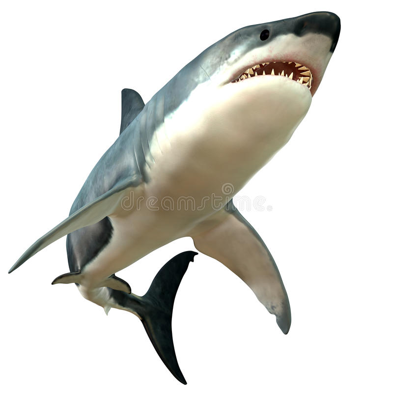 Grande corpo do tubarão branco