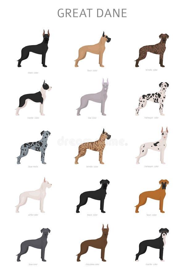 Grande dinamarqu?s Variaties diferentes do grupo do cão da cor do revestimento fotografia de stock