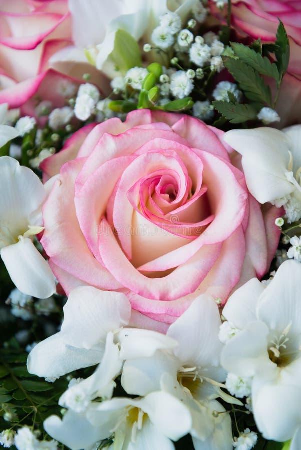 Download Grande E Bella Rosa Di Rosa Fotografia Stock - Immagine di coppie, data: 104787172