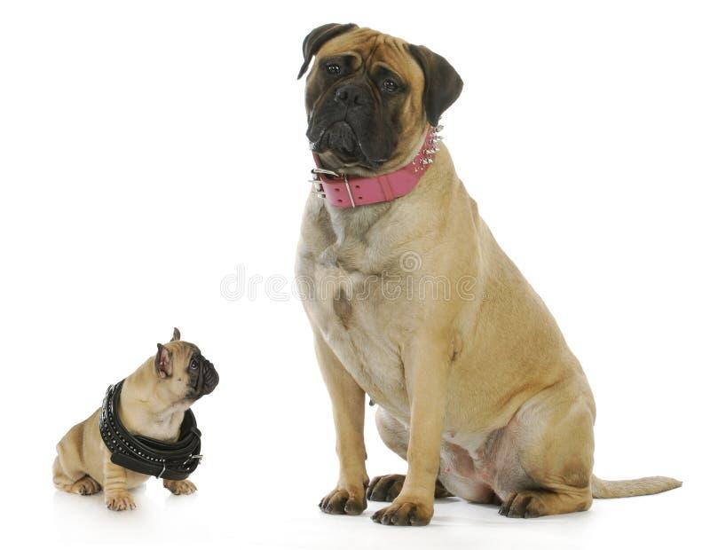 Grande e piccolo cane fotografie stock libere da diritti