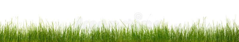 Grande erba orizzontale supplementare immagini stock libere da diritti