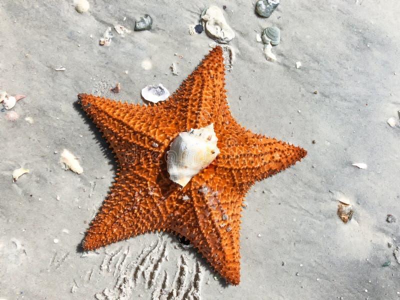 grande estrela de mar alaranjada na areia fotografia de stock